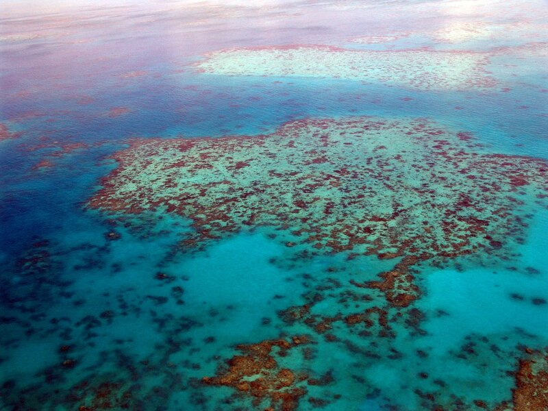 The Great Barrier Reef Has Lost Half of its Corals Since 1995