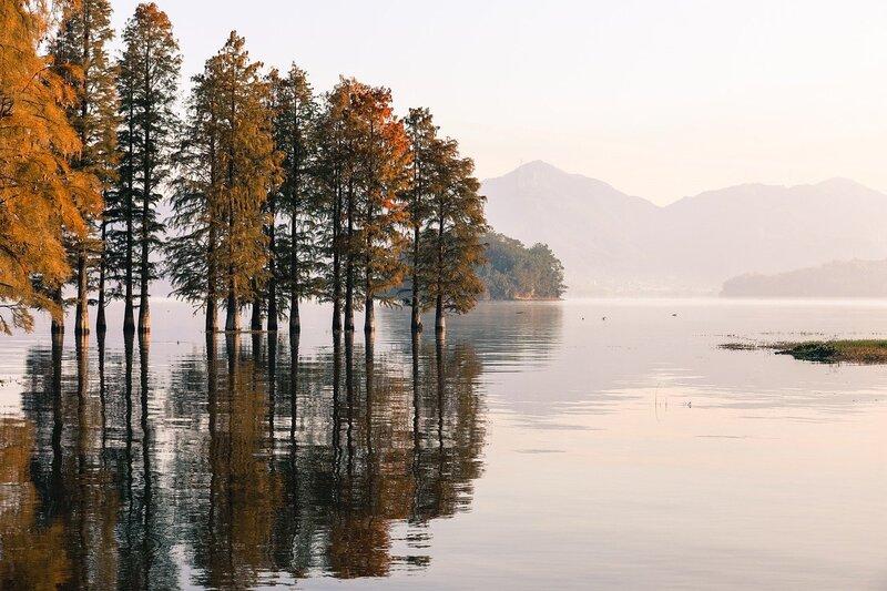 Majority of Europe Wildlife, Ecosystems Declining- Report