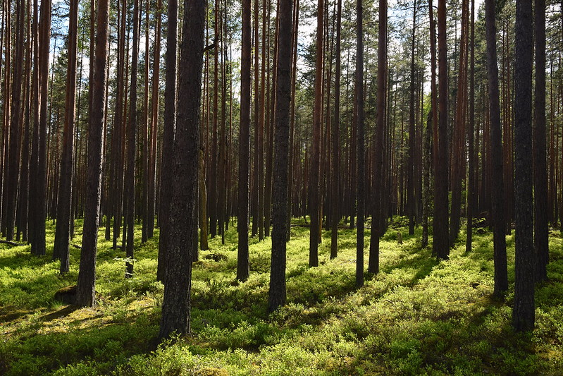 Deforestation in Russia: Depleting the Lungs of the World
