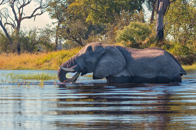 A Planned Oil Drilling Project Threatens the Okavango Delta Ecosystem