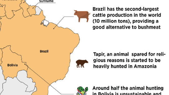 Bushmeat Hunting in South America