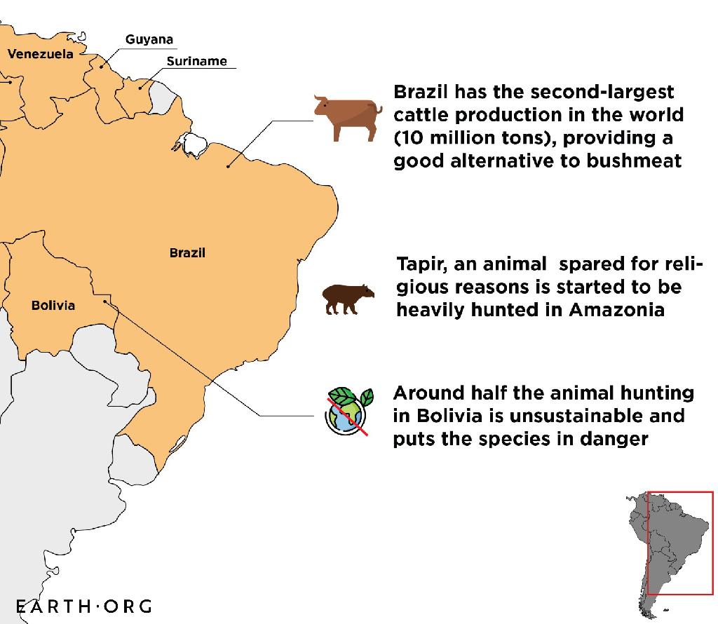 south america bushmeat hunting
