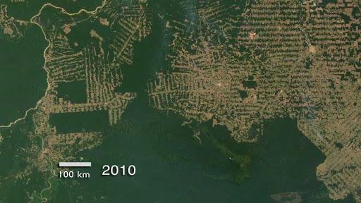 deforestation satellite imagery