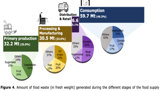 Food Waste and Consumer-Level Solutions