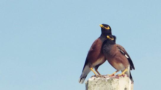 Europe's Most Invasive Species Identified- Study