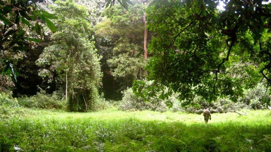 Poor Governance Fuels 'Horrible Dynamic' of Deforestation in DRC