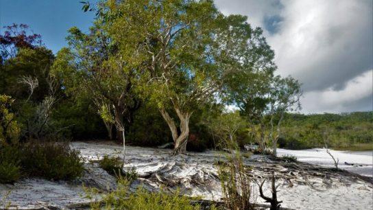 This Year's Bushfire Season in Australia Has Arrived Early, as Fraser Island Burns