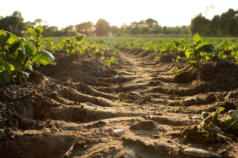 The Future of Global Soils Looks 'Bleak'- UN