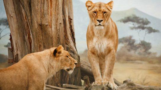 Wildlife Conservation Day: The Benefits of Wildlife Refuges