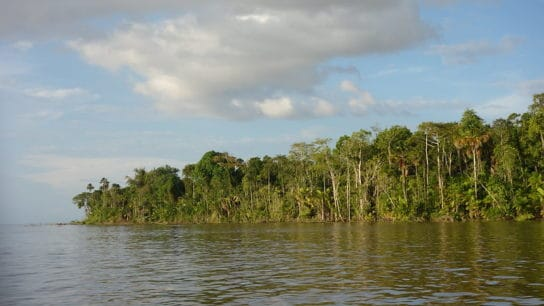 Lack of Protection Leaves Spain-Size Swath of Brazilian Amazon Up for Grabs