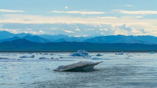 Trump Readies Last-Minute Auctions in Arctic Wildlife Refuge to Oil Drillers