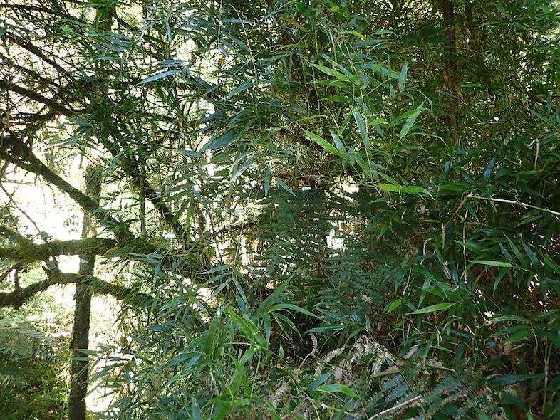 madagascar forests