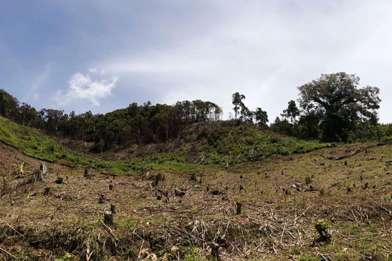 deforestation sumatra