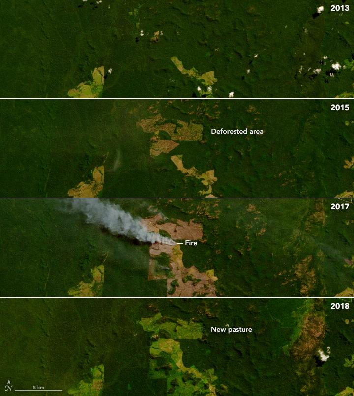 amazon deforestation time series