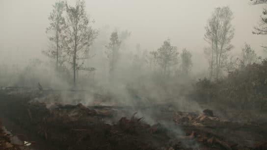 Peatlands on Fire Again as Burning Season Starts in Indonesia