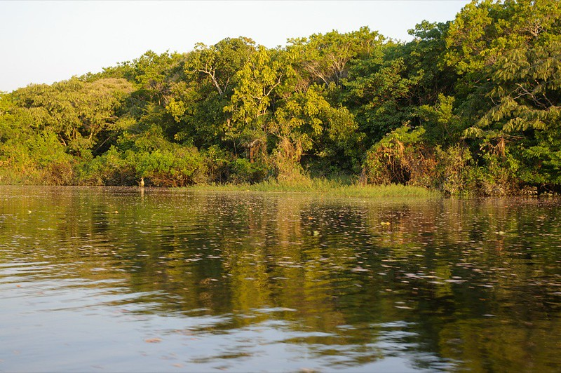 Indigenous Lands Contain Nearly Half of the Intact Forests in the Amazon