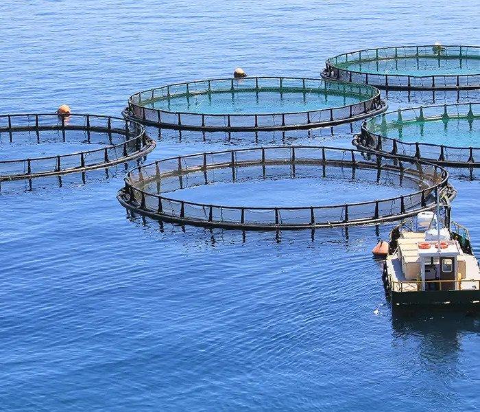 overfishing sustainability