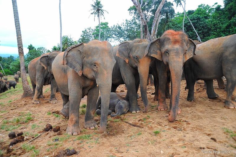 Farmers Move to Occupy a Critical Elephant Corridor in Sri Lanka