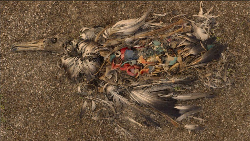 bioplastics bioplastic animal harm degradation