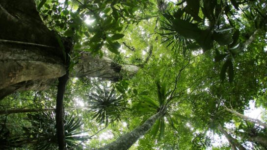 Governments, Companies Pledge USD$1 Billion For Tropical Forests