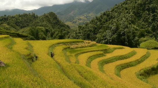 'Drastic Forest Development': Vietnam to Plant 1 Billion Trees- But How?