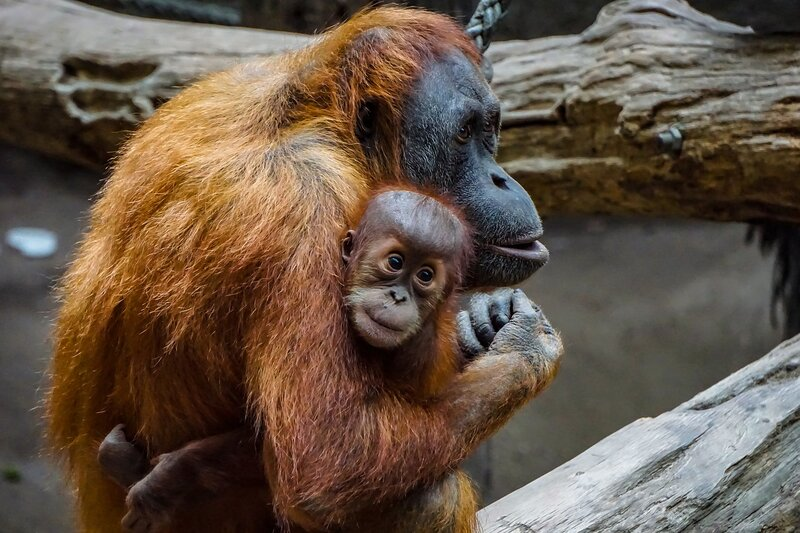 Endangered Species Day 2021: 12 of the Most Endangered Animals in the World