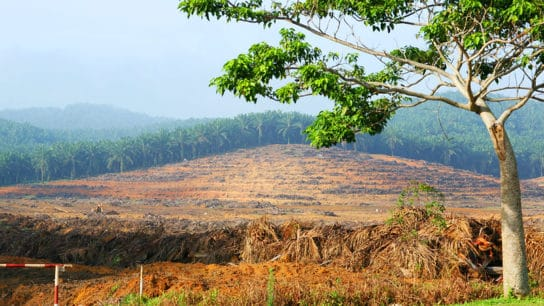 Belgium Bans Biofuels Made From Palm Oil, Soy