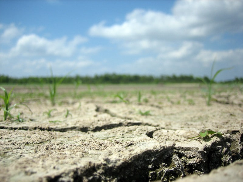 How These 5 Countries Are Fighting Desertification