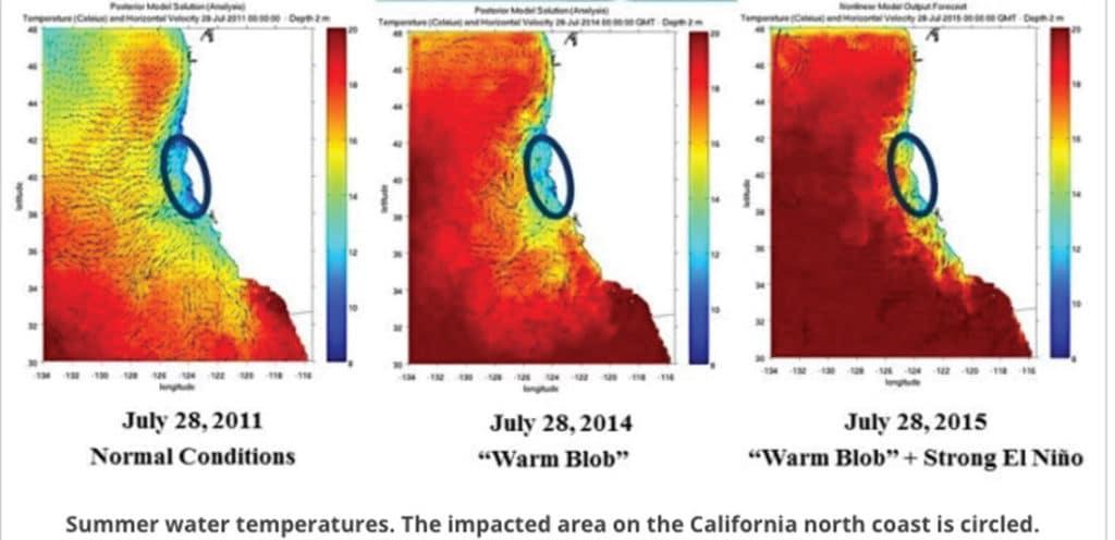kelp forest warm blob high temperatures ocean