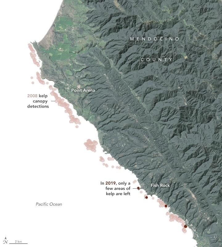 kelp forests california 2008 vs 2019