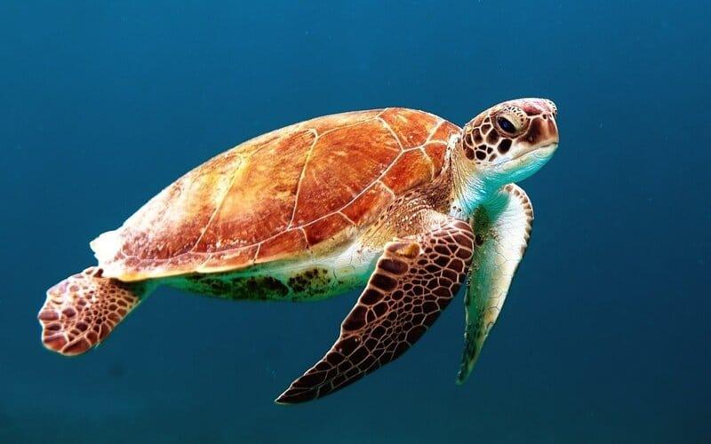 13 Endangered Marine Species