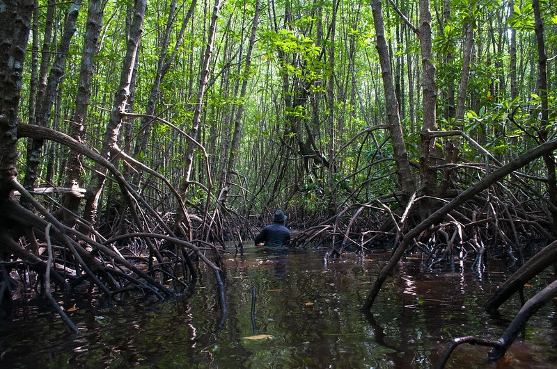 7 Incredible Facts About Mangroves You Need to Know About