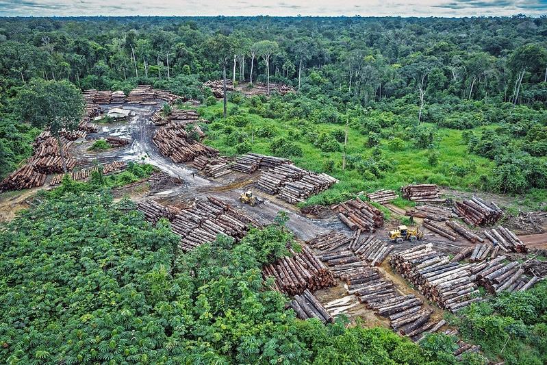 Deforestation Soars 40% in Xingu River Basin in Brazilian Amazon
