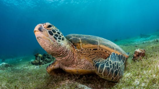 'Abnormally High' Turtle Deaths After Acid-Laden Ship Sinks Off Sri Lanka