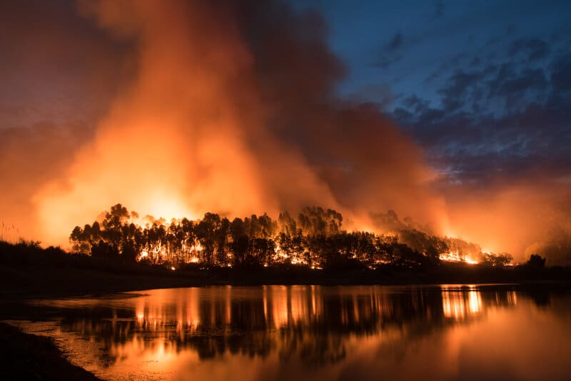 Canada Heatwave Results In Record Number Of Wildfires And Over a Billion Marine Animal Deaths