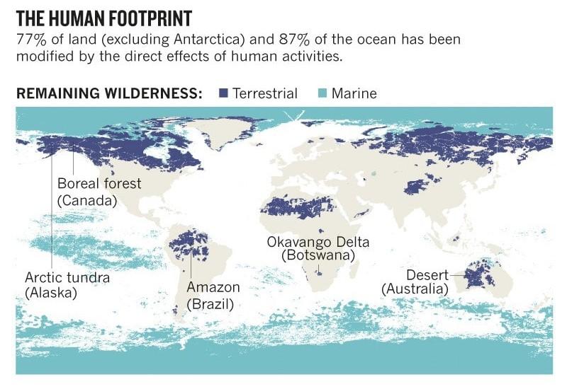 wilderness loss remaining 6th mass extinction
