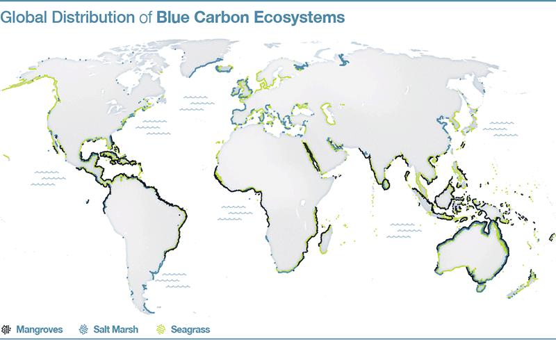 blue carbon, blue carbon ecosystems