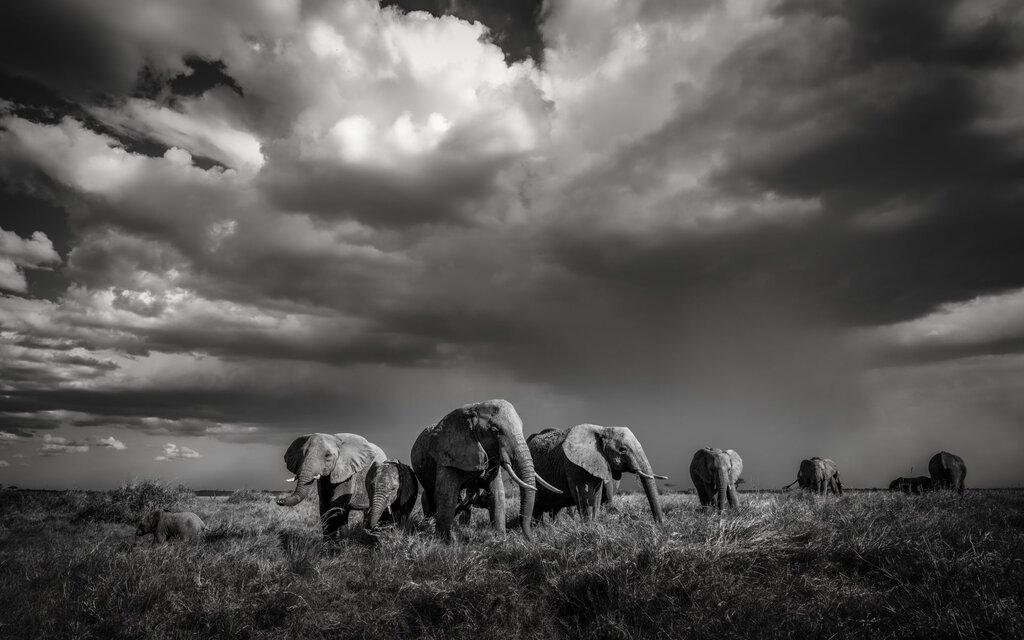 wildlife tourism, explorers without extinction, Artur Stankiewicz