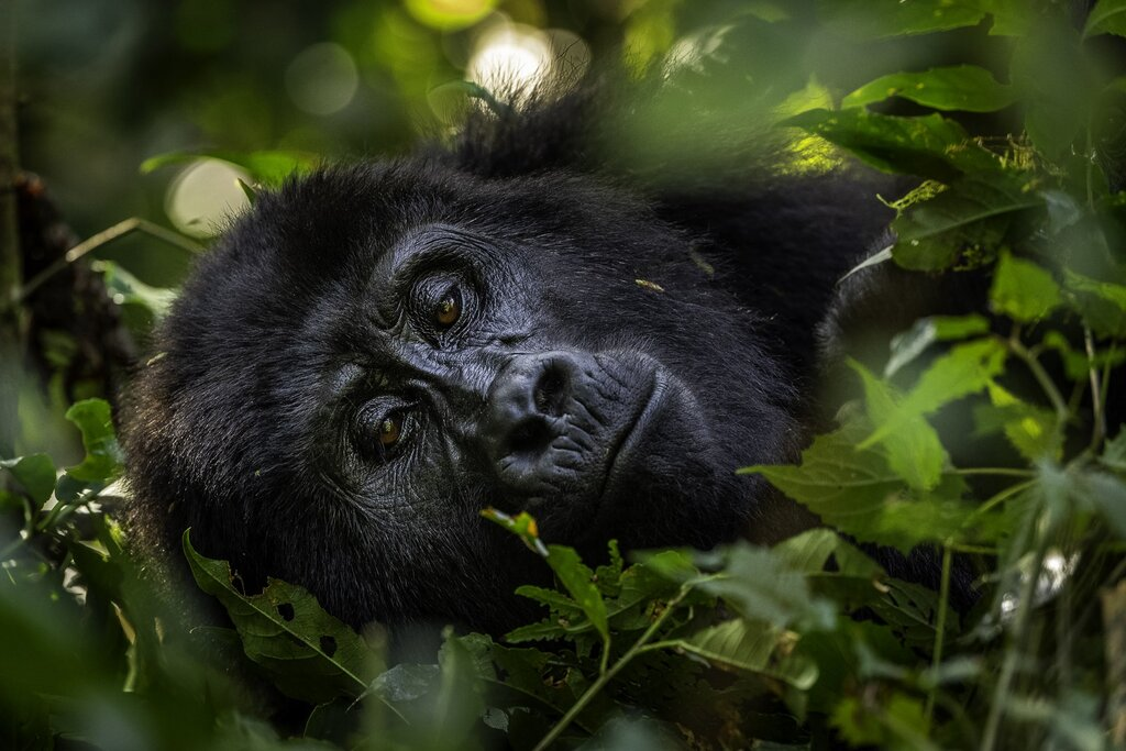 How Responsible Wildlife Tourism Can Protect Endangered Species