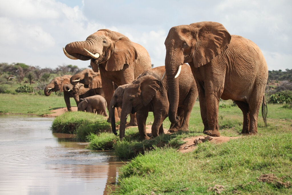 africa elephants, space for giants