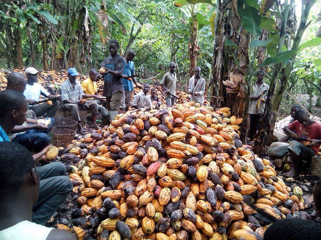 Tech Giant Amazon Rolls Out Rainforest Carbon Offset Project
