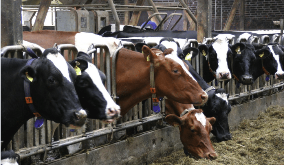 20 Meat and Milk Producers Responsible for More Emissions than Germany