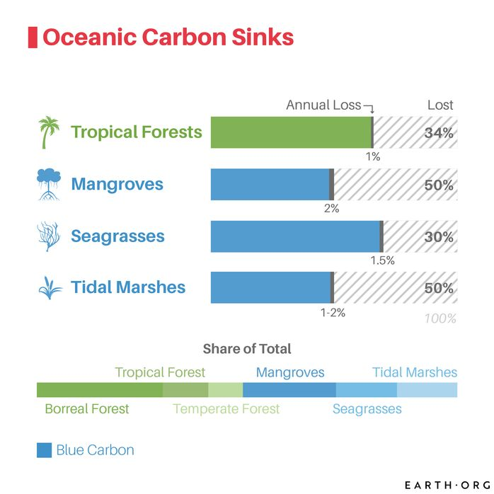 blue carbon ocean ecosystems carbon sinks