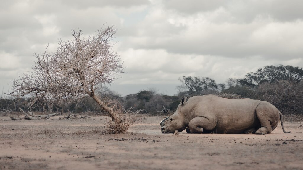 3 Poachers Received Combined 105 Years Sentencing for Rhino Poaching in South Africa