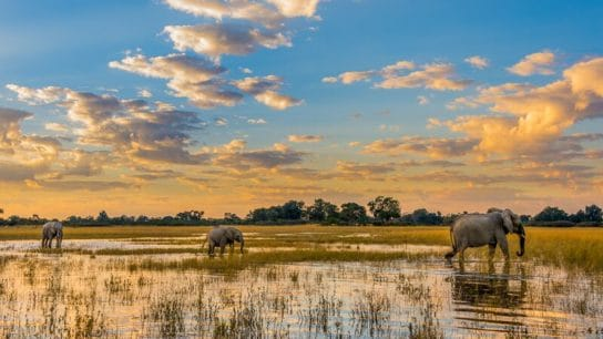 Prince Harry, Leonardo DiCaprio Join Calls to End Oil Drilling in the Okavango River Basin