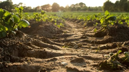 Climate Change is Shifting Crops